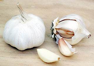 320px-Garlic