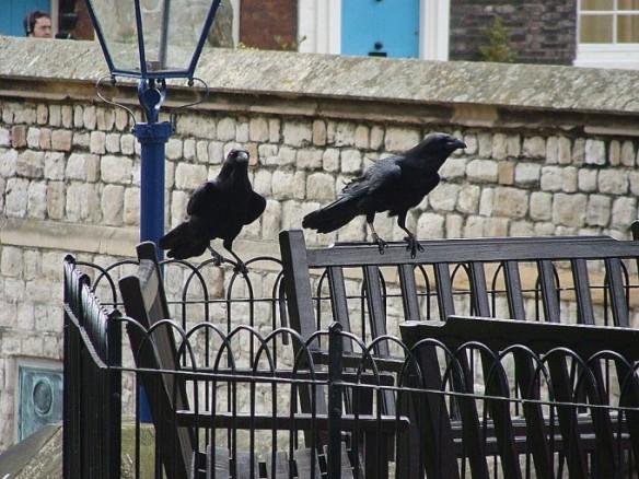cuervos.jpgs