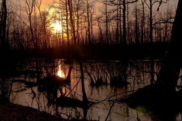 Pinelands-Pine-Barrens-New-Jersey-Trees.jpg.1000x0_q80_crop-smart