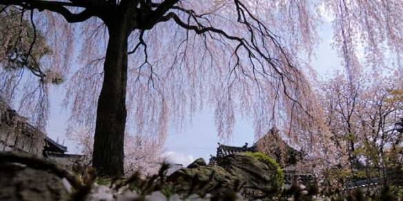 Torre-de-la-primavera
