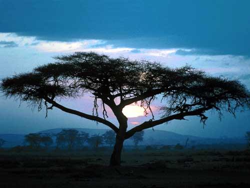 Arbol-Africa