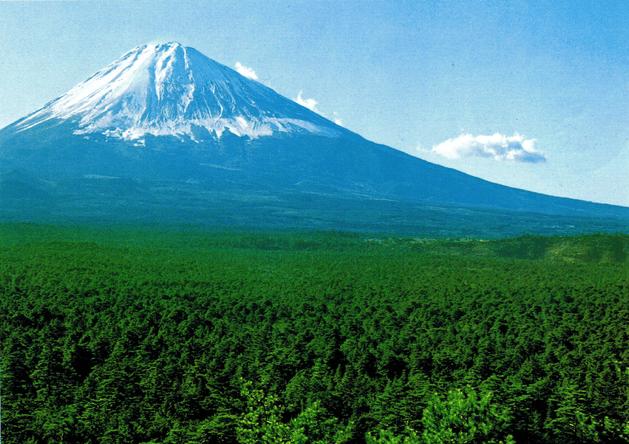 Aokigahara.-El-bosque-de-los-suicidas.-Japón-1-e1519496078839