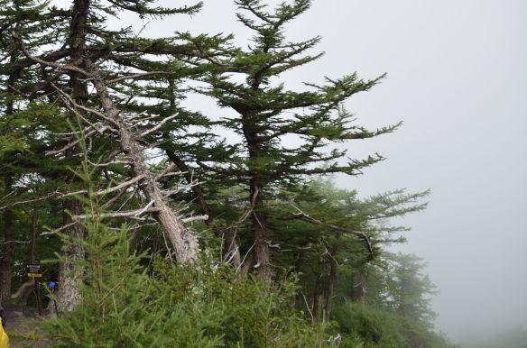 Bosque-de-los-suicidas-de-Japón