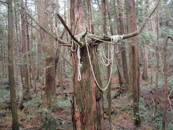 El-bosque-de-los-suicidas-de-Japón